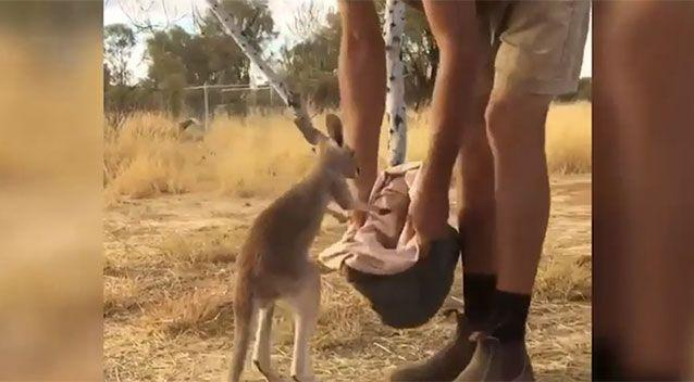 The adorable footage online has been melting hearts. Source: The Kangaroo Sanctuary Alice Springs/ Facebook