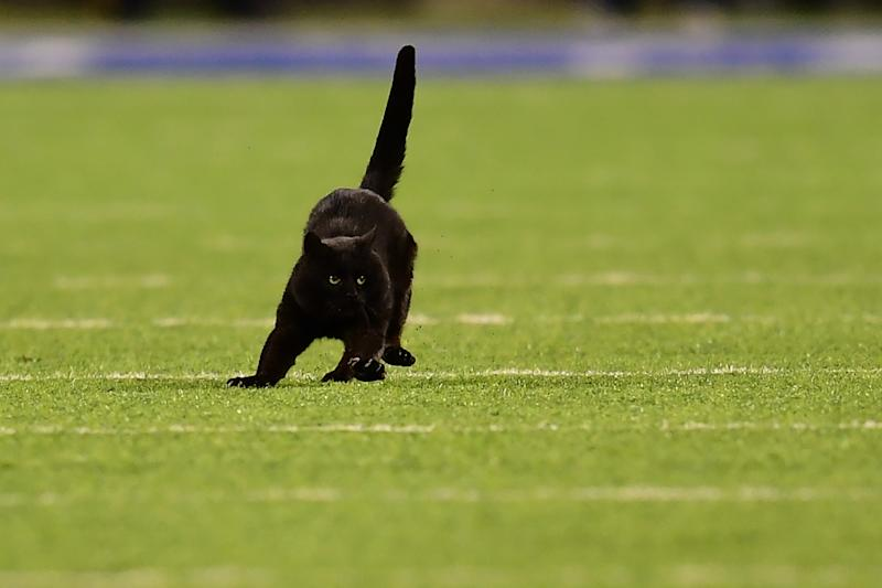 MetLife Stadium searching for the famous black cat from 'Monday Night Football'