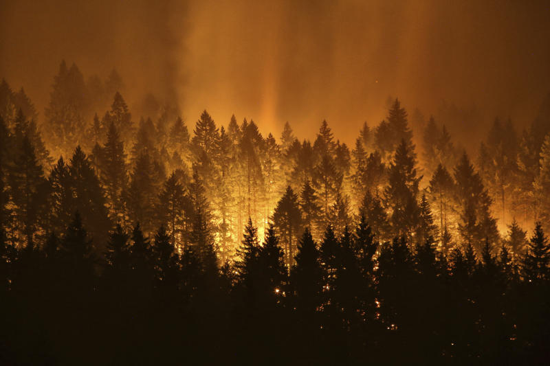 US West's wildfires spark calls to thin tree-choked forests