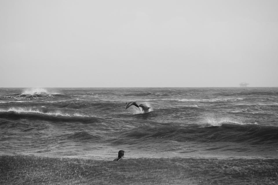 Dolphins play in the surf off Grand Isle while a surfer watching in the rain