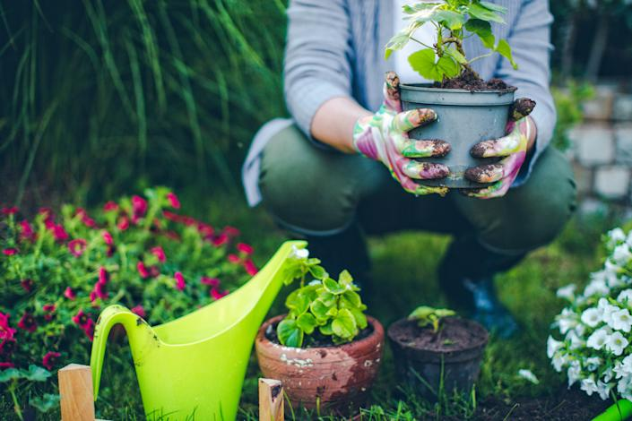 Use washing up water to water your plants. (Getty Images)