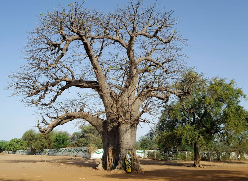 A woman from a Baye Fall community, stands beside a baobab tree waiting for transport in Ndem