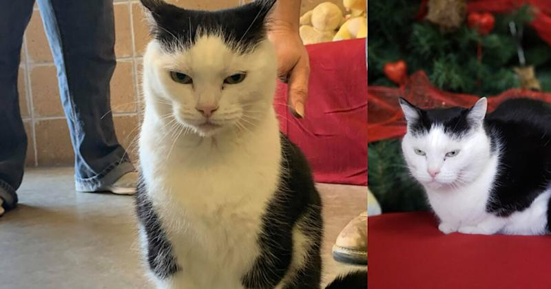 'World's worst' cat who is 'just a jerk' now up for adoption