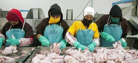 Workers cut chickens for packaging at a chicken farm in Moca