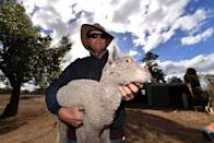 <p>Farmer Greg Stones carries away a weak lamb from a paddock in the drought-hit area of Gunnedah in New South Wales [Picture: Getty] </p>
