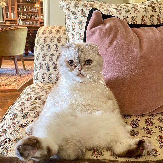 """<p>The singer loves showing off her cats on the social media platform which is the only time we get a glimpse inside her Nashville home. We think we spy a booze cabinet in the background, so when can we move in Taylor?</p><p><a href=""""https://www.instagram.com/p/B_Tb8N4DyKM/"""" rel=""""nofollow noopener"""" target=""""_blank"""" data-ylk=""""slk:See the original post on Instagram"""" class=""""link rapid-noclick-resp"""">See the original post on Instagram</a></p>"""