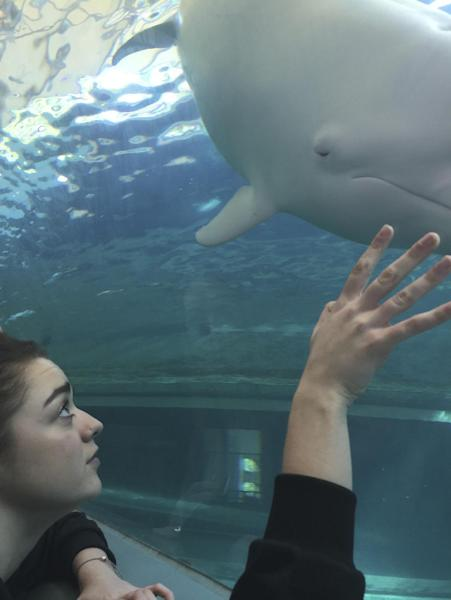 """In this photo released by DolphinProject, Maisie Williams watches Angel, an albino dolphin, at the Taiji Whale Museum in Taiji, Wakayama prefecture, central Japan, Friday, Dec. 2, 2016. """"Game of Thrones"""" star Williams, 19, wants everyone to stop buying tickets to marine shows, the best way, she thinks, to stop the dolphin capture and killing in Japan. Williams spoke Friday from the small Japanese town of Taiji, made famous in """"The Cove"""" an Oscar-winning film that documented the dolphin hunt and starred Ric O'Barry, the dolphin trainer for the """"Flipper"""" TV series. (Lincoln O'Barry via AP)"""