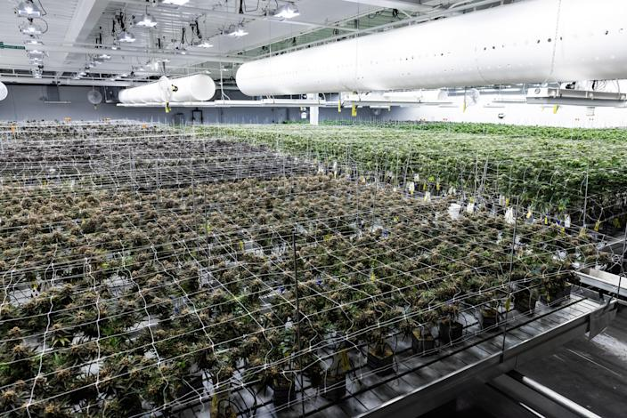 Holistic Industries' growth facility in Maryland.