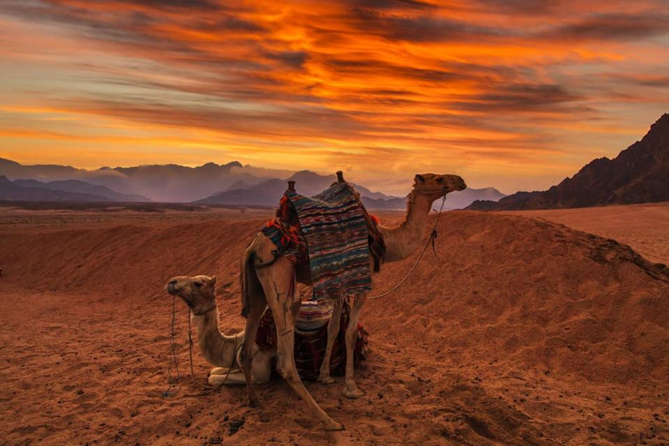 56°C heat waves possible in Middle East, North Africa this century
