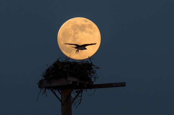 Supermoon Saturday: Supersized Full Moon Rises This Weekend