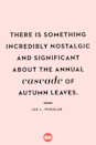 <p>There is something incredibly nostalgic and significant about the annual cascade of autumn leaves.</p>