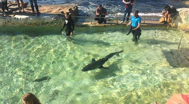 The shark is currently being monitored. Source: Rob Daly