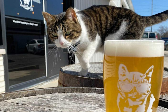 Brewery Mouser Retires