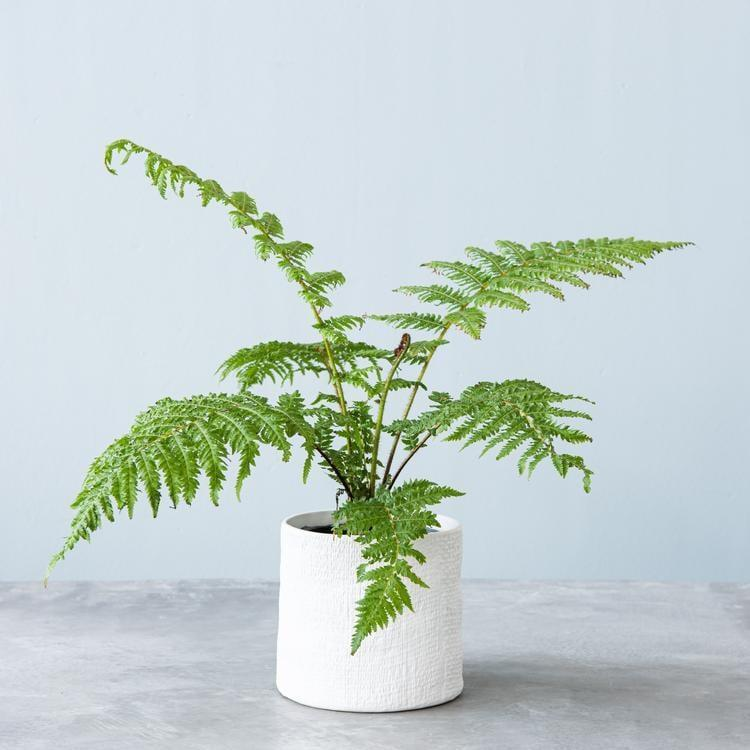 """<p>A lover of shade and lots of humidity, the <a href=""""https://www.popsugar.com/buy/Live-Australian-Tree-Fern-568817?p_name=Live%20Australian%20Tree%20Fern&retailer=shop.magnolia.com&pid=568817&price=40&evar1=casa%3Aus&evar9=46127505&evar98=https%3A%2F%2Fwww.popsugar.com%2Fhome%2Fphoto-gallery%2F46127505%2Fimage%2F47428957%2FLive-Australian-Tree-Fern&list1=shopping%2Cgift%20guide%2Cflowers%2Chouse%20plants%2Cplants%2Cmothers%20day%2Cgifts%20for%20women&prop13=api&pdata=1"""" class=""""link rapid-noclick-resp"""" rel=""""nofollow noopener"""" target=""""_blank"""" data-ylk=""""slk:Live Australian Tree Fern"""">Live Australian Tree Fern</a> ($40) will bring a tropical look into your mom's home.</p>"""