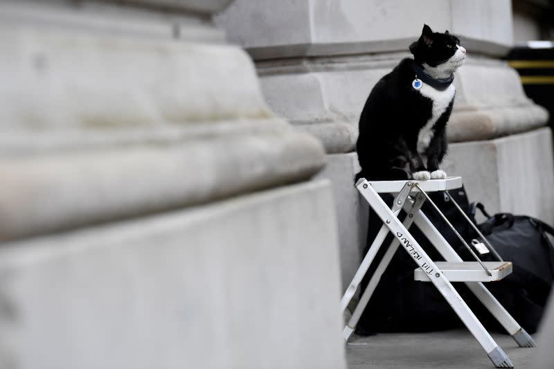 FILE PHOTO: Palmerston, the Foreign Office cat, sits on a photographer's ladder outside Downing Street in London
