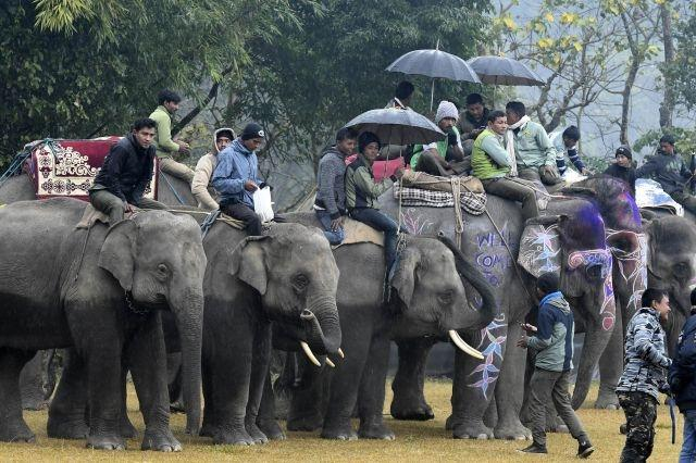 Nepal elephant festival scrutinised for beauty and bruises