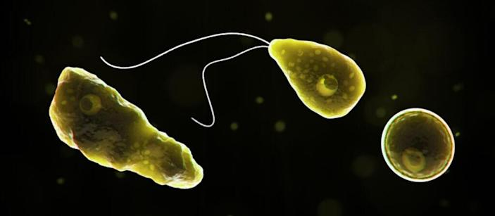 """Nageleria fowleri, more widely known as th """"brain-eating amoeba,"""" can be found in lakes, rivers and soil and can cause a rare infection fo the brain. (via CDC)"""