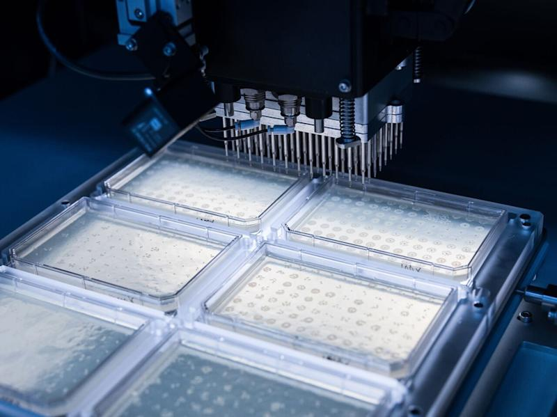 A colony-picking robot isolating microbial strains at Gingko's DNA foundry in Boston.