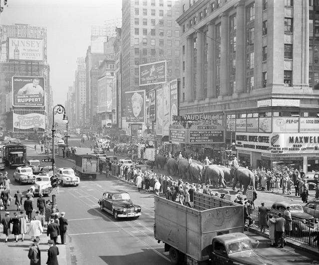 <p>Ringling Bros. and Barnum & Bailey Circus elephants are seen on parade near New York's Times Square, April 9, 1945. (AP Photo/Anthony Camerano) </p>