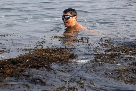 Chef Bun Lai of Miya's Sushi dives for seaweed which he will use at his restaurant in New Haven, Connecticut, U.S., August 27, 2018. REUTERS/Shannon Stapleton