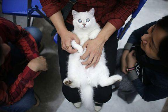 This cat clearly doesn't want to be touched.