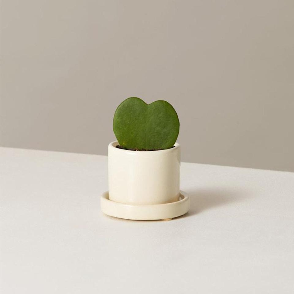 """$28, The Sill. <a href=""""https://www.thesill.com/products/hoya-plant-potted?variant=30408482947177"""">Get it now!</a>"""