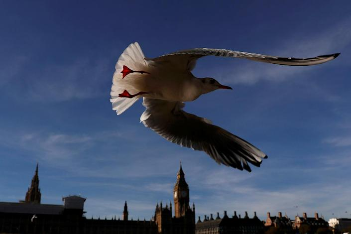 <p>A seagull flies past the Houses of Parliament in central London, Britain November 2, 2016. (REUTERS/Stefan Wermuth) </p>