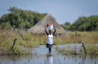 A woman carries a bucket on her head as she wades through floodwaters in the village of Wang Chot, Old Fangak county, Jonglei state, South Sudan Thursday, Nov. 26, 2020. One county in South Sudan is likely in famine and tens of thousands of people in five other counties are on the brink of starvation, according to a new report released Friday, Dec. 11, 2020 by international food security experts. (AP Photo/Maura Ajak)