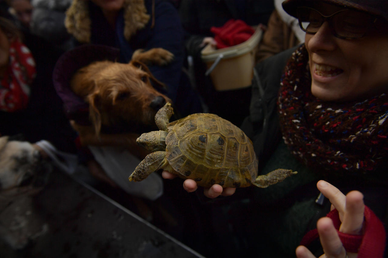 <p>A woman holds up a turtle to be blessed with other pets outside of the Saint Pablo church, during the feast of St. Anthony, Spain's patron saint of animals, in Zaragoza, northern Spain, Wednesday, Jan.17, 2018. (Photo: Alvaro Barrientos/AP) </p>