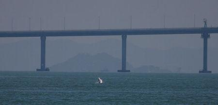 <p>A Chinese white dolphin jumps out of the sea in front of the Hong Kong-Zhuhai-Macau bridge off Lantau island in Hong Kong. (REUTERS/Bobby Yip) </p>