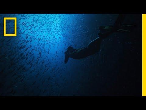 """<p>Another National Geographic show, <em>Earth Live</em> began in 2017 and is co-hosted by Jane Lynch, Phil Keoghan and wildlife expert Chris Packham. State-of-the-art cameras take you on a too-real ride of some of the weirdest, coolest parts of the world, featuring animals that can only be described the same way.</p><p><a class=""""link rapid-noclick-resp"""" href=""""https://go.redirectingat.com?id=74968X1596630&url=https%3A%2F%2Fwww.disneyplus.com%2Fmovies%2Fearth-live%2F3TixgmCQamSL&sref=https%3A%2F%2Fwww.redbookmag.com%2Flife%2Fg37132419%2Fbest-disney-plus-shows%2F"""" rel=""""nofollow noopener"""" target=""""_blank"""" data-ylk=""""slk:Watch Now"""">Watch Now</a></p><p><a href=""""https://www.youtube.com/watch?v=us-wzWt0uF8"""" rel=""""nofollow noopener"""" target=""""_blank"""" data-ylk=""""slk:See the original post on Youtube"""" class=""""link rapid-noclick-resp"""">See the original post on Youtube</a></p>"""