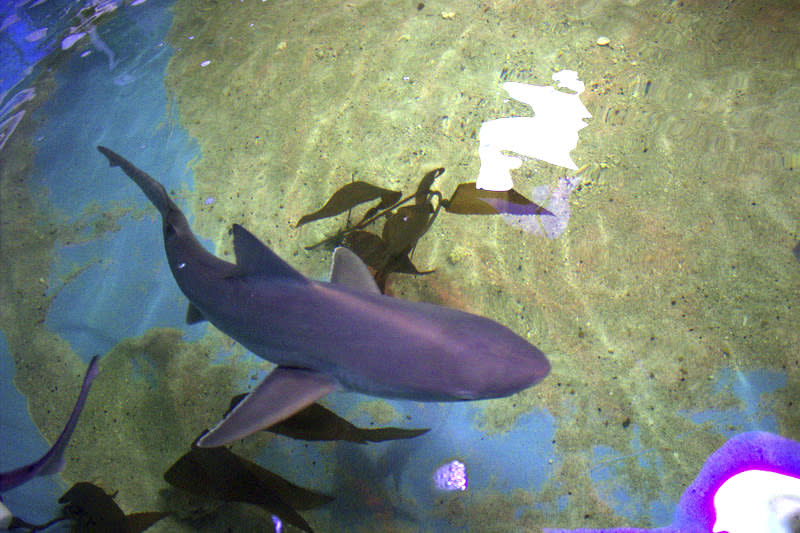 Officials said seven live sharks and three dead ones were seized, the live ones were later released. Source: AP