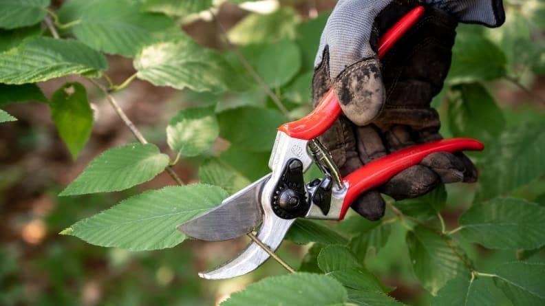While slightly more expensive than others we tested, Felco pruning shears more than proved their worth every penny.
