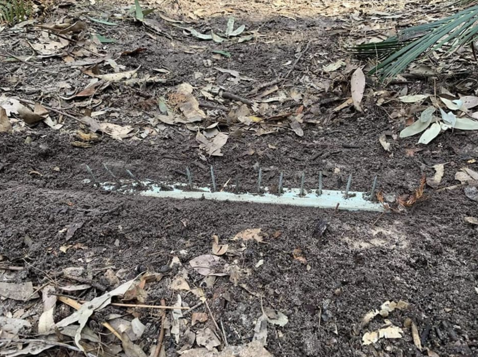 Scott Uzelac said he found the booby trap hiding under a pile of leaves. Source: Scott Uzelac