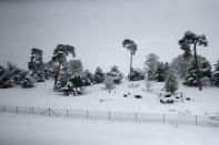 <p>Trees stand after snow covered the landscape in southeast England.Public transport remains widely affected, with many rail operators reporting that disruption will continue throughout Wednesday. (AP Photo/Matt Dunham) </p>