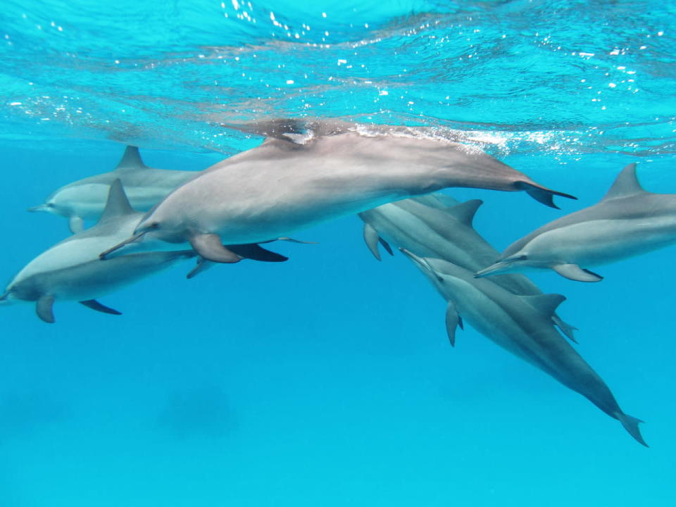 Social distance: New rule bans closeness to these Hawaiian dolphins