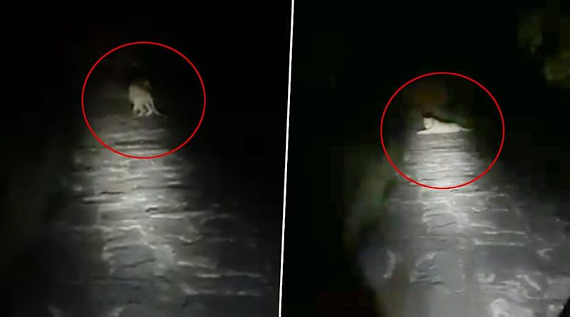 Gir Forest Employee Requests Lion Sitting in His Path in Gujarati to Let Him Go Home and The Animal Obliges! Viral Video is Wonderful Example of Co-existence
