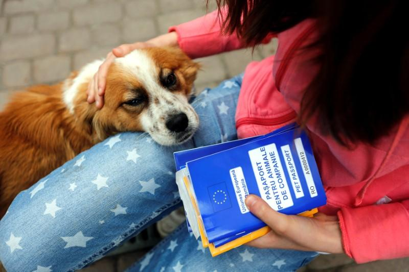 Pet passports: EU to crack down on criminals abusing the system