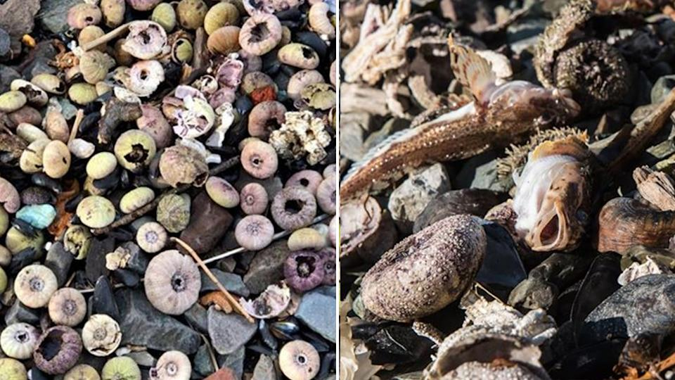 In some parts of the Kamchatka region, three quarters of sea organisms are dead, Greenpeace reported. Source: Greenpeace Russia