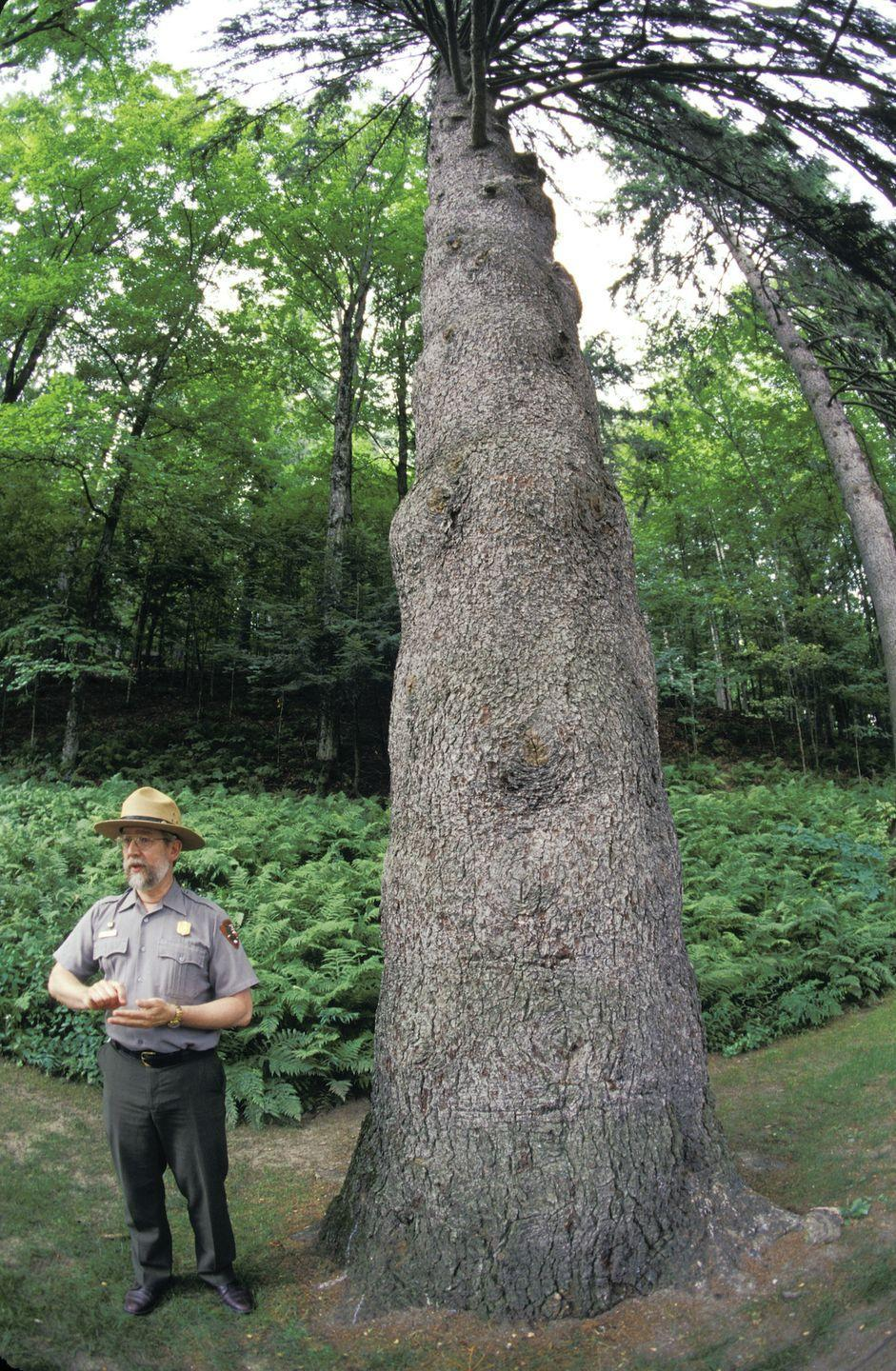 """<p><a href=""""https://www.nps.gov/mabi/index.htm"""" rel=""""nofollow noopener"""" target=""""_blank"""" data-ylk=""""slk:Marsh-Billings-Rockefeller National Historical Park"""" class=""""link rapid-noclick-resp""""><strong>Marsh-Billings-Rockefeller National Historical Park </strong></a></p><p>Vermont is filled with outstanding outdoor space, and its only national park is just one spot where you can see their amazing forestry. </p>"""