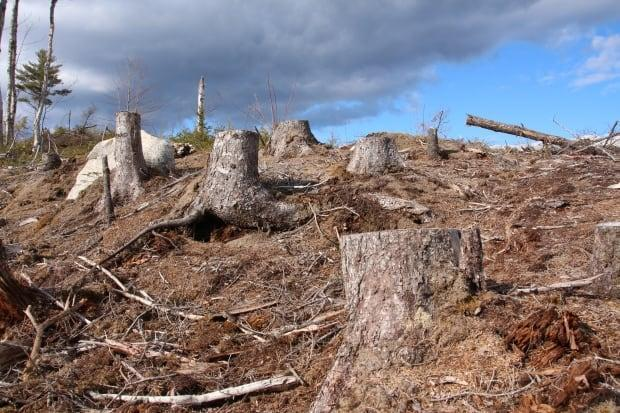 Last November, half of the members of an advisory committee to the Lands and Forestry minister called for a moratorium on clear-cutting on Crown land.