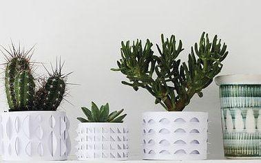Many people used to collect cacti when they were younger - YES