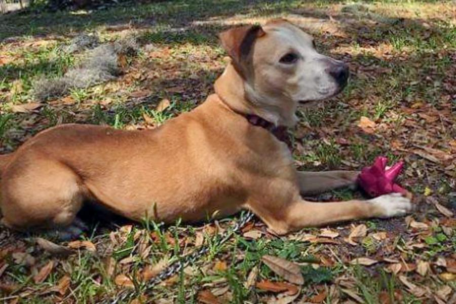 Weekly pup-date: 6 cuddly canines to adopt now in Jacksonville