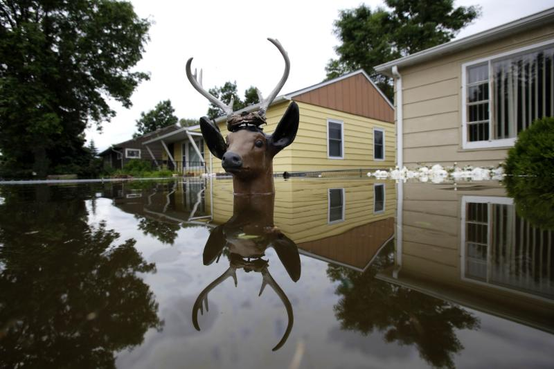 The head of a lawn deer remains above the flood waters from the Souris River in an evacuated western neighborhood of Minot, N.D. Friday, June 24, 2011.  About one-fourth of the city's 40,000 residents have evacuated their homes. (AP Photo/Charles Rex Arbogast)