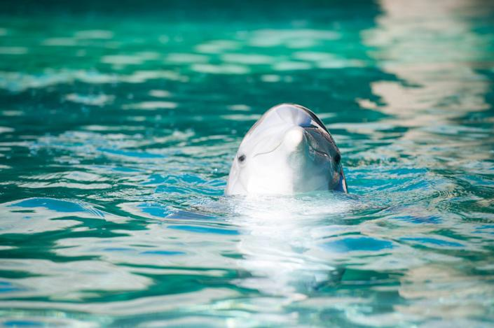 One of the inmates at Dolphinaris Arizona on the Salt