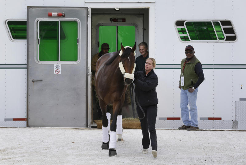 Kentucky Derby winner Orb is walked off of a horse trailer by exercise rider Jennifer Patterson after arriving at Pimlico Race Course in Baltimore, Monday, May 13, 2013. Orb is scheduled to run in the Preakness Stakes on May 18. (AP Photo/Patrick Semansky)
