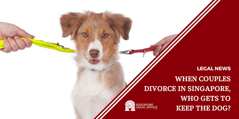 When Couples Divorce in Singapore, Who Gets to Keep the Dog?