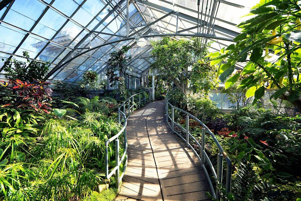 <p>Botanical gardens can be fun for all ages, and, of course, are especially beautiful in the spring. Find your local botanical garden and book some tickets to ensure social distancing and a fun time for all.</p>