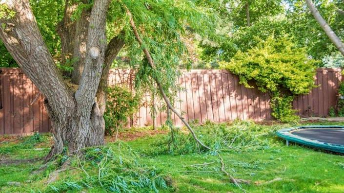If possible, try to keep your trees properly trimmed of dead branches or limbs to protect your home and others.