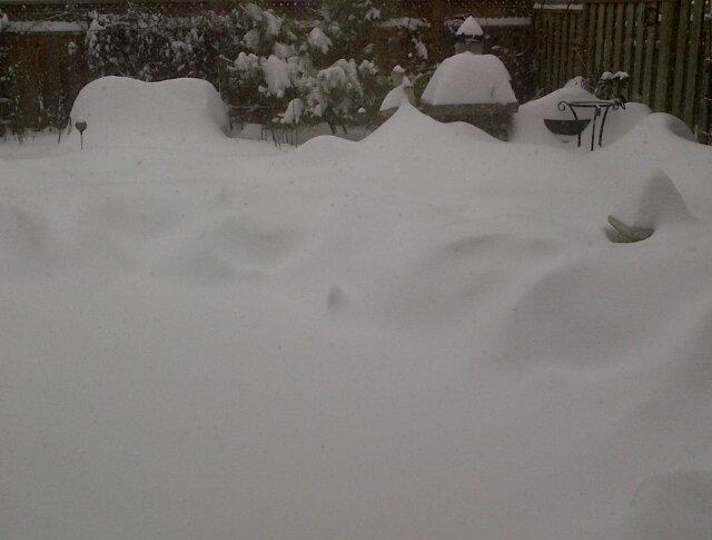 @chaser19: My backyard Thornhill. #TOsnowpics pic.twitter.com/AUDkC2Bl